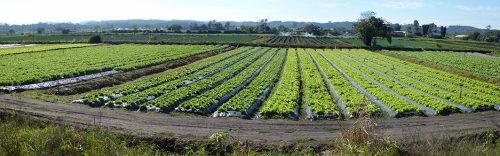 SP SP Mogi Produçao de hortigranjeiros